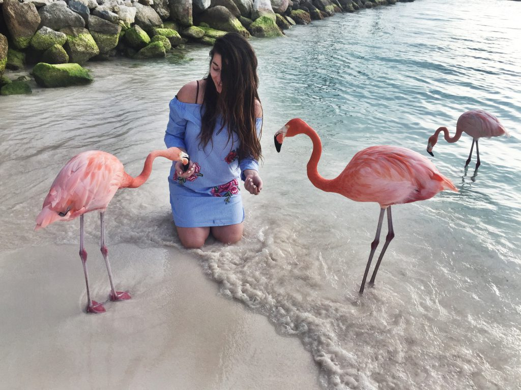wendy-flamingos-aruba